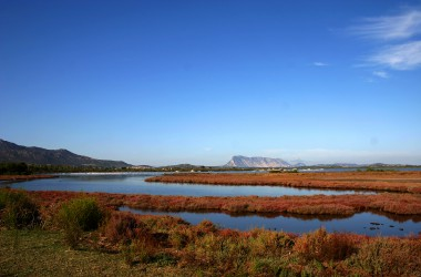 La laguna dei fenicotteri | San Teodoro | Sardegna